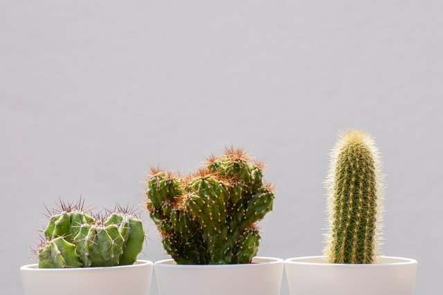 cactus subscription service